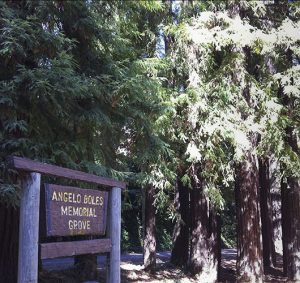 Photo of Angelo Boles Memorial Grove Sign in front of trees