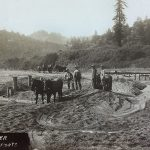Historic Photo: Damming the Russian River using draft horse teams