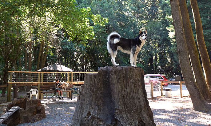 Bruno Farnocchia Dog Park